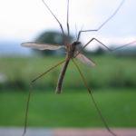 Ocet na komary