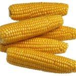 Złocisty kolor kukurydzy