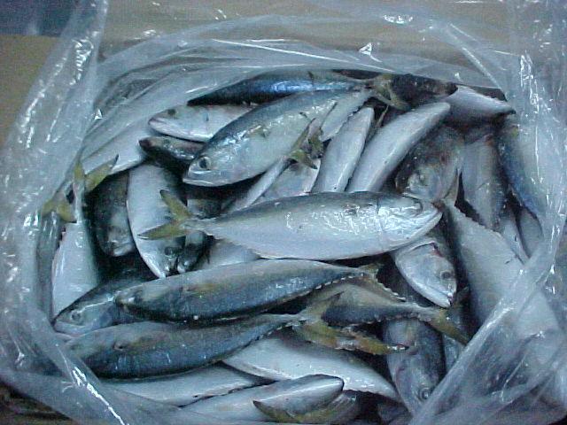 sweiza-ryba