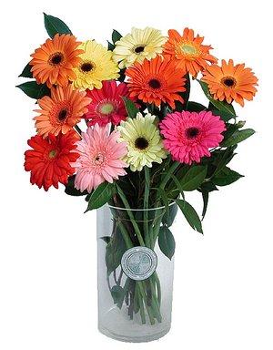 Jakie Kwiaty Nie Lubia Swojego Towarzystwa Jestem Pania Domu