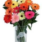 Jakie kwiaty nie lubią swojego towarzystwa?