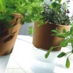 Rośliny redukujące zapach w kuchni