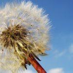 Biorezonans – skuteczna metoda na walkę z chorobą?
