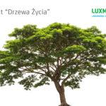 LUX MED sadzi drzewa na Polu Mokotowskim