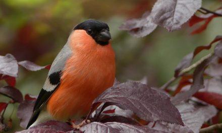 Karmniki dla ptaków – czyli jak ożywić swój ogród zimą