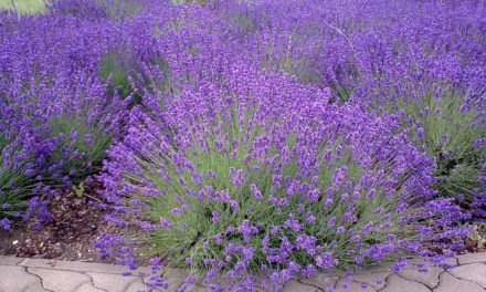 Ogród w odcieniach błękitu