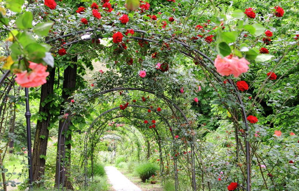 Pergola, fontanna, latarnie, czyli dekorujemy ogród